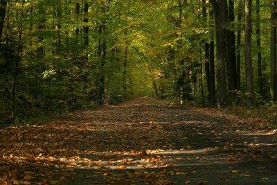 Jak las to tylko jesienią - fotografia, która urzeka